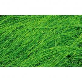 Sisal Fiber - Bright Green
